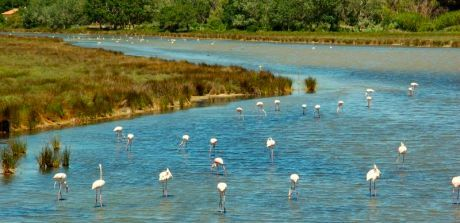 flamants-camargue.jpg