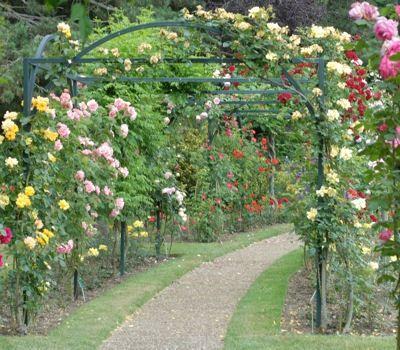 fleurs-a-l-honneur-462231-1fd382c.jpg