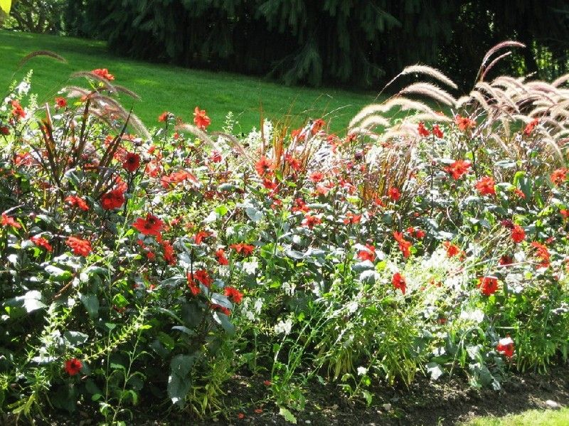 fleurs-jardin-v.jpg