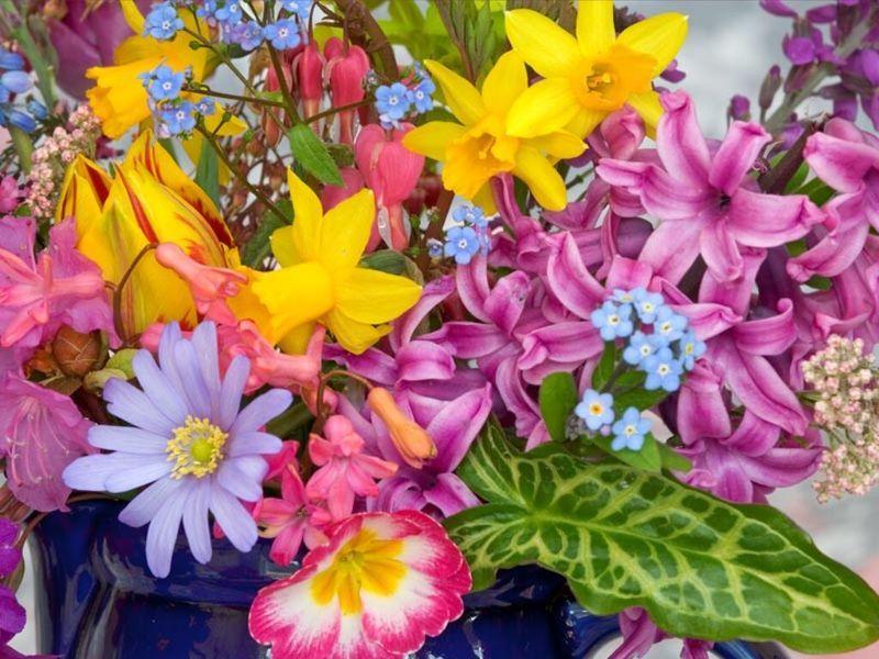 fleurs_jardin032.jpg
