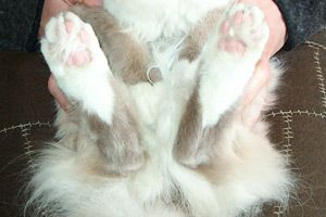 gatto-frodo-14-1b82db3.jpg