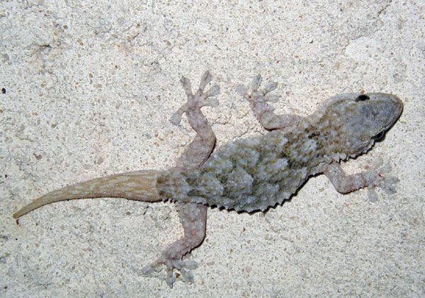 gecko-ld-1-180b4fb.jpg