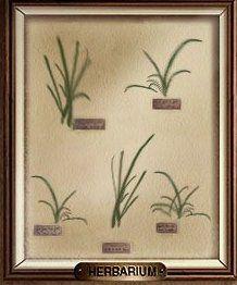 herbarium-12190e9.jpg