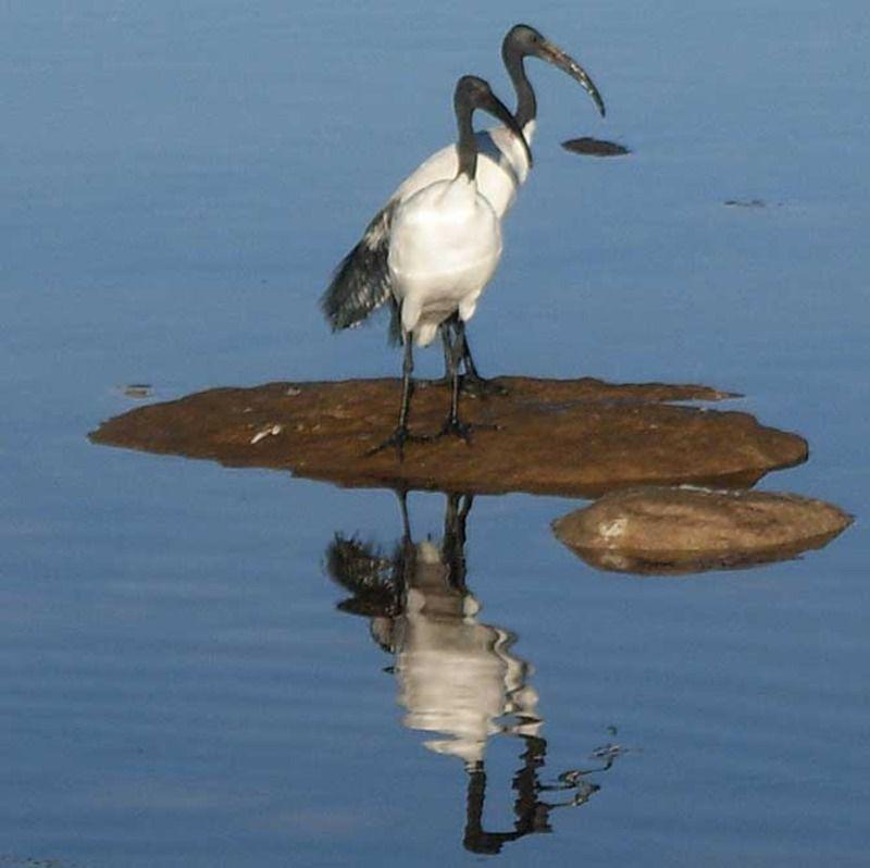 ibis-sacre-2-1570dc2.jpg