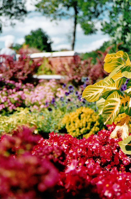 jardin_botanique-1218f32.jpg