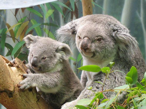 koala-8002.jpg