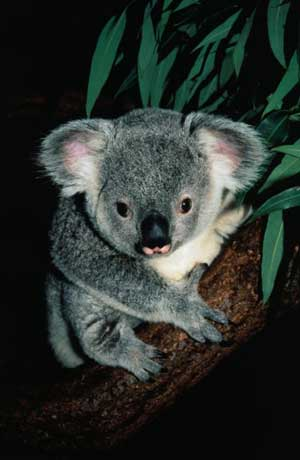 koala_002.jpg