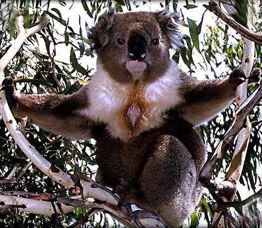 koala_003.jpg