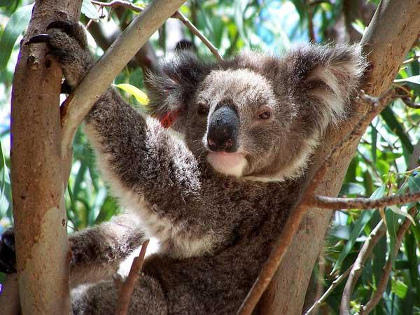 koalald08.jpg