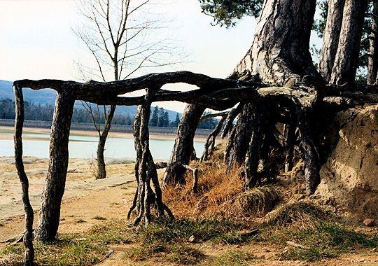 l-arbre-araignee-277630-20741ab.jpg