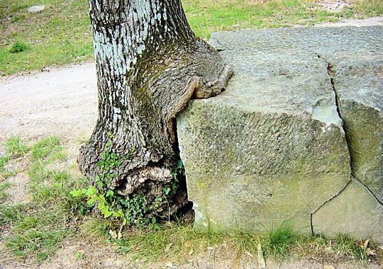 l-arbre-mangeur-277640-207420a.jpg