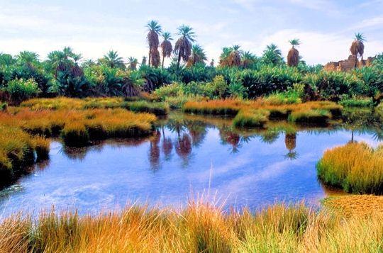 l-oasis-djado-niger-.jpg