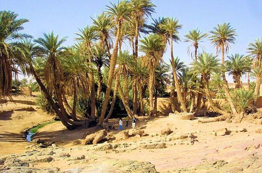 l-oasis-sacree-m.jpg