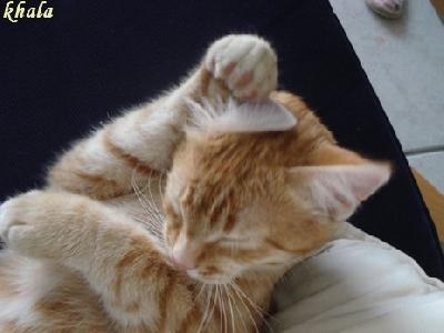 Questions - réponses - Pourquoi les chats se lèchent-ils l'oreille avant la pluie ?