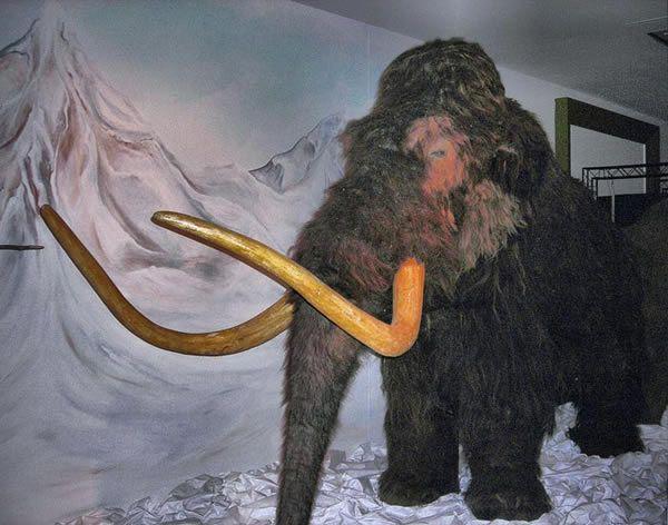mammouth-1-1757a60.jpg