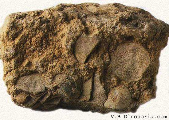 microfossile-201f48a.jpg