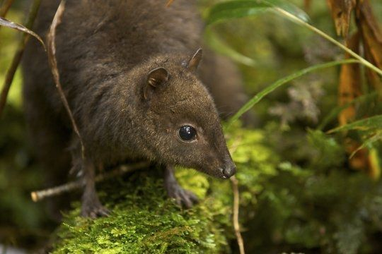 minuscule-kangourou-618376-211bda8.jpg