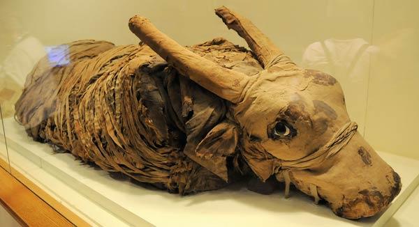 momie-egypte-5-13722da.jpg
