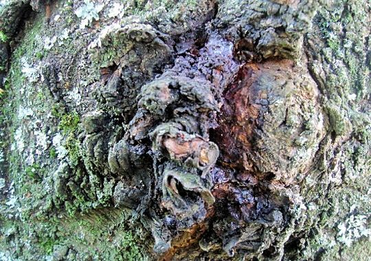 monstre-cerisier-277634-20741d2.jpg