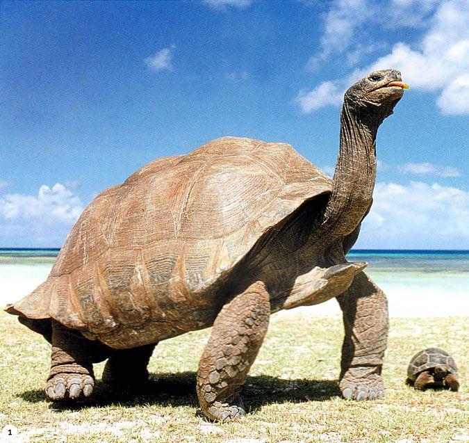 Images d 39 esp ces de tortue animaux 2004 - Images tortue ...