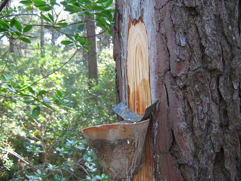 Bois et for u00eats Le gemmage # Fiscalité Bois Et Forêts