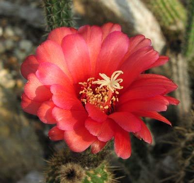 Au jardin des fleurs aux noms d 39 animaux for Au jardin des fleurs