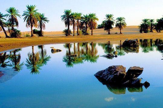 oasis-.jpg