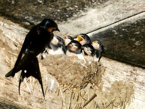 Les surprises de l'Ecologie - Les oiseaux migrateurs plus casaniers -