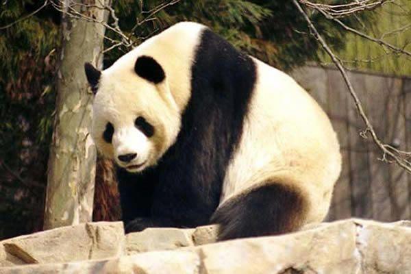 panda-103-19b8a1b.jpg