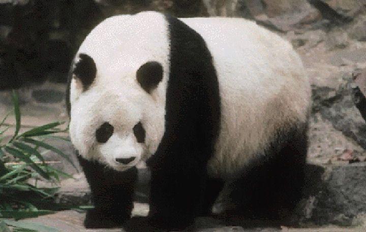 panda_geant02.jpg