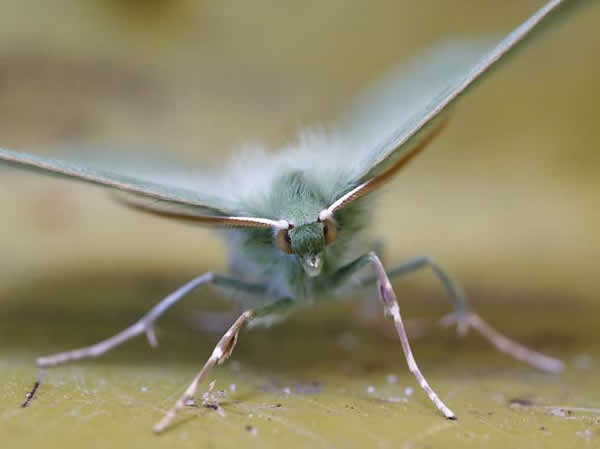 papillon-27.jpg