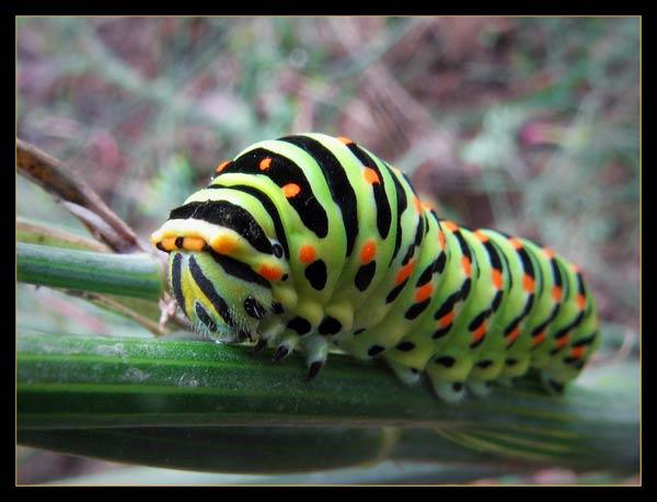 papillon-40.jpg