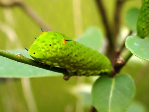 papillon-42.jpg