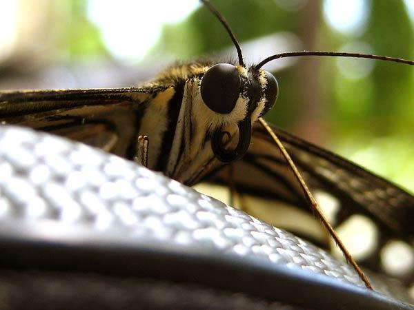 papillon-46.jpg