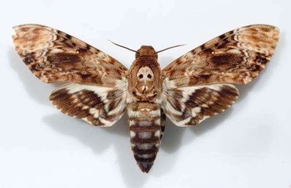 papillon-49.jpg