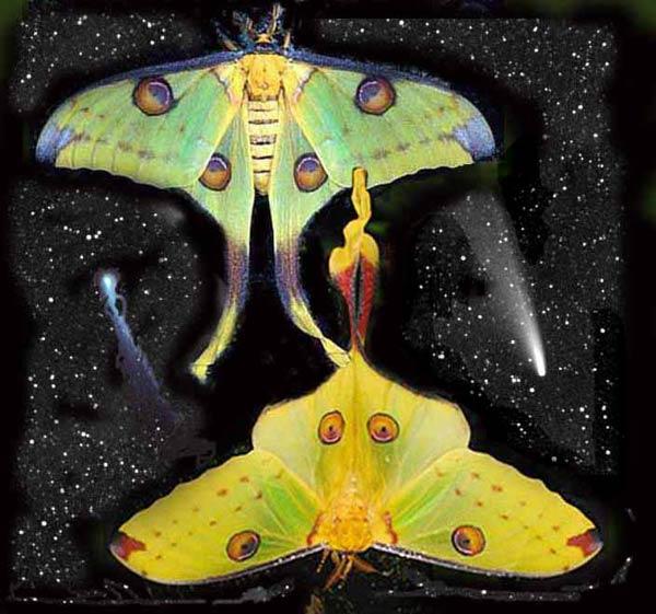 papillon-60.jpg