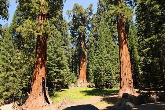 parc-national-sequoia-582427-1b640d0.jpg