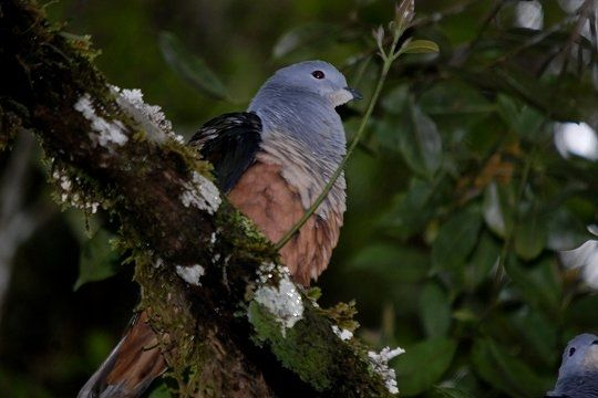 pigeon-.jpg