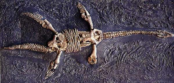 plesiosaurus.jpg