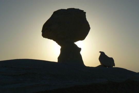 poule-l-arbre-321082-2245c88.jpg