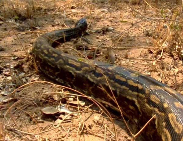 python-seba-d-1-157b4fa.jpg