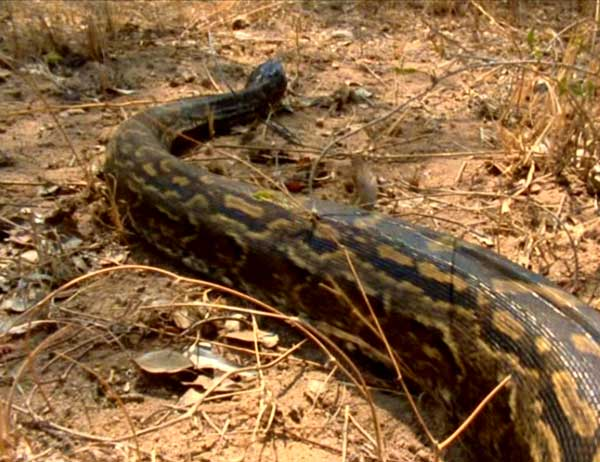 python-seba-d-1-157b4fa1.jpg