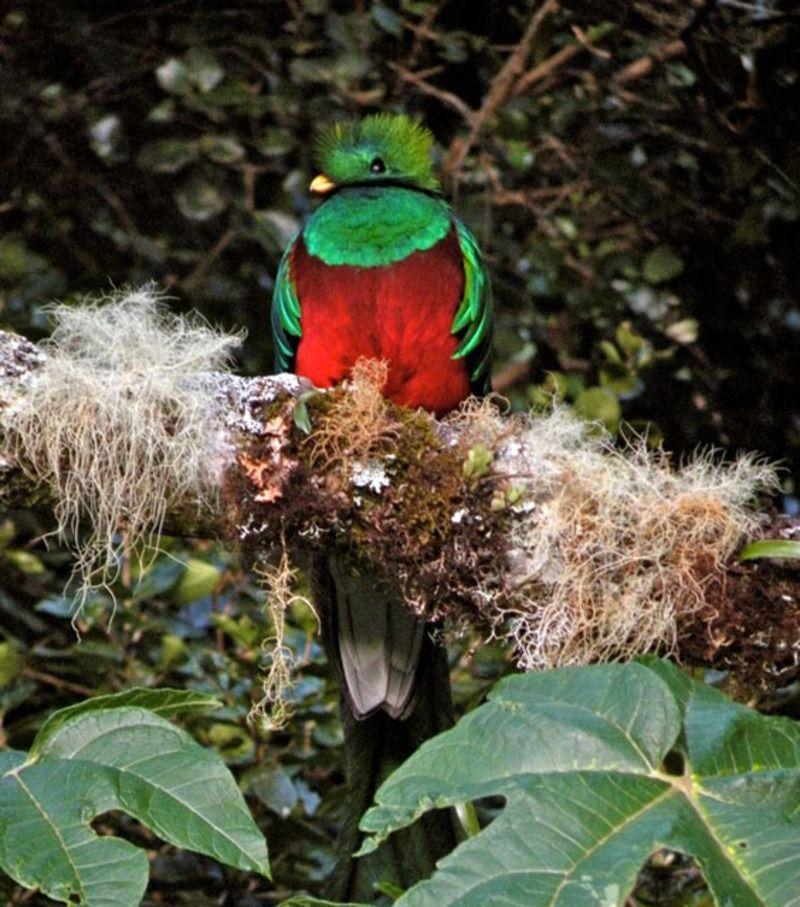 quetzal-1-186f85e.jpg