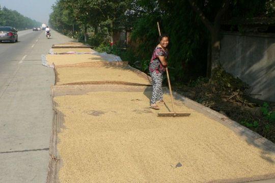 recolte-riz-772071.jpg