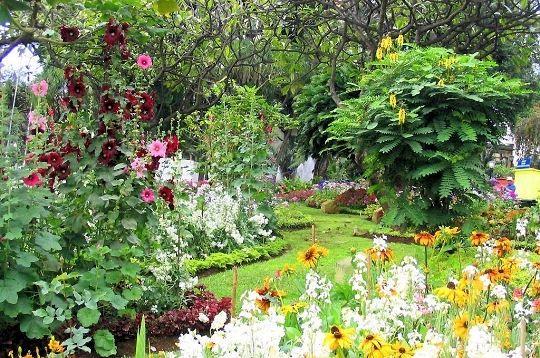 Parcs et jardins massifs et parterres floraux - Planter des roses tremieres ...