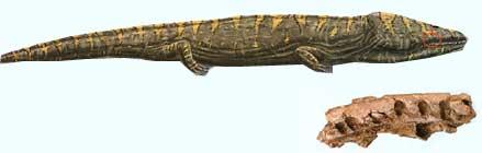 salamandre-208d51e.jpg
