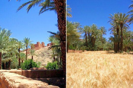 sein-l-oasis.jpg