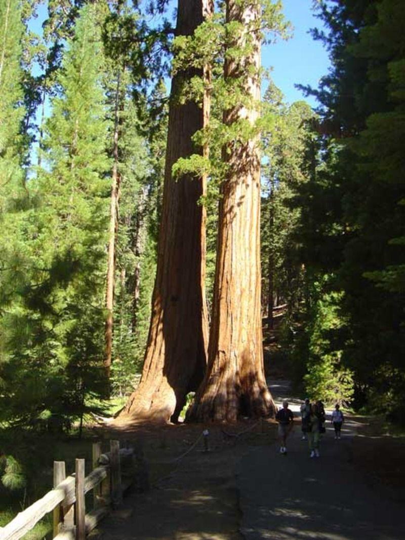sequoia_02-11d694e.jpg