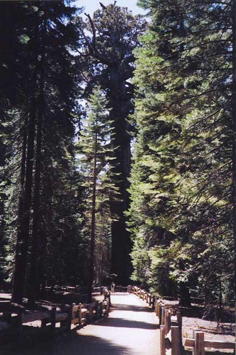 sequoia_04-11d6923.jpg