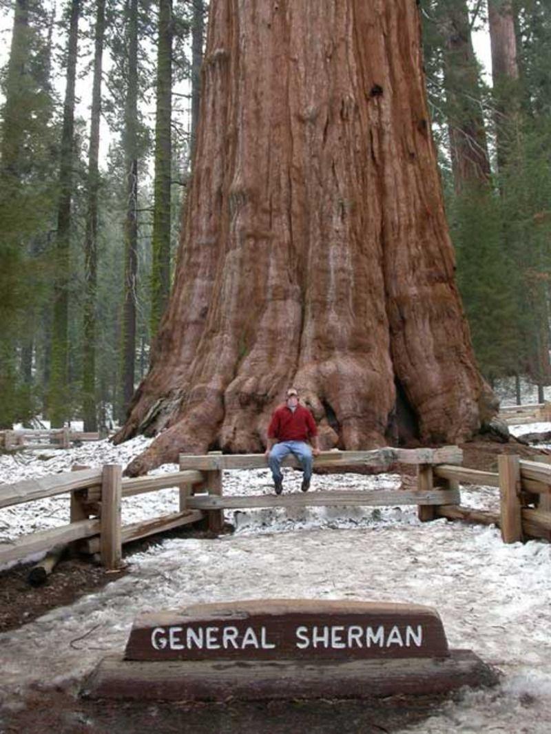 sequoia_06-11d68e3.jpg